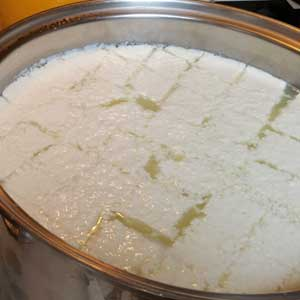 cut curds for homemade mozzarella cheese